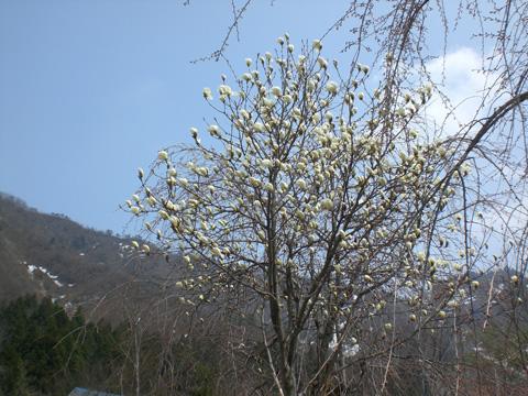 桜待つ二人_b0145843_0295778.jpg