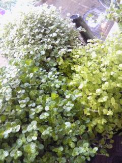 緑が気持ちいいころ。。。_a0229658_13351588.jpg