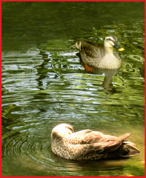 尾形光琳の「燕子花」、見たよ!春のシ・ア・ワ・セ。_e0236072_105582.jpg