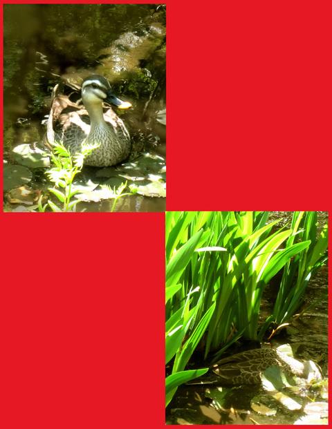 尾形光琳の「燕子花」、見たよ!春のシ・ア・ワ・セ。_e0236072_1347100.jpg