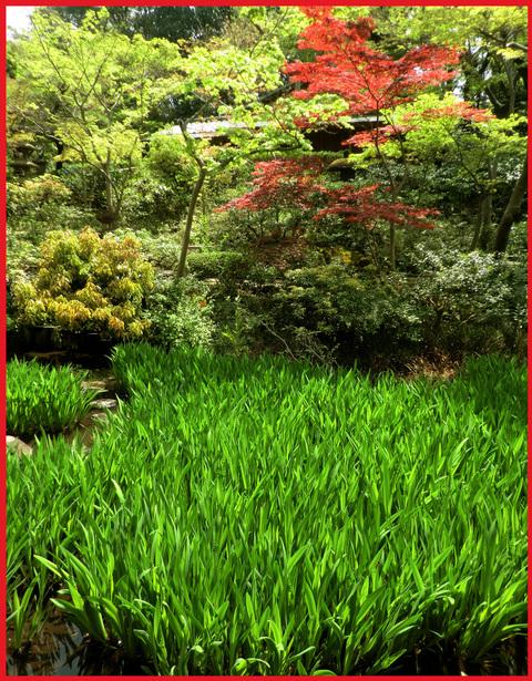 尾形光琳の「燕子花」、見たよ!春のシ・ア・ワ・セ。_e0236072_191012.jpg