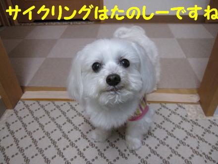 b0193480_15244469.jpg