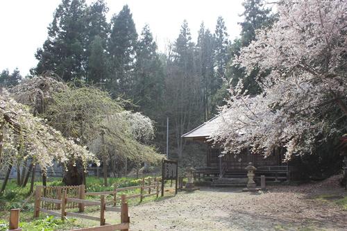 会津の五桜を取材してきました~♪part.2_d0250986_1811135.jpg