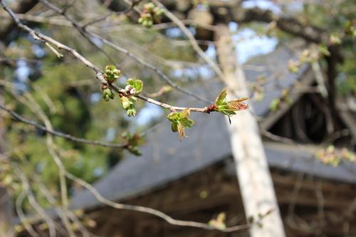 会津の五桜を取材してきました~♪part.2_d0250986_18142426.jpg