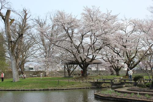 会津の五桜を取材してきました~♪part.2_d0250986_1851525.jpg