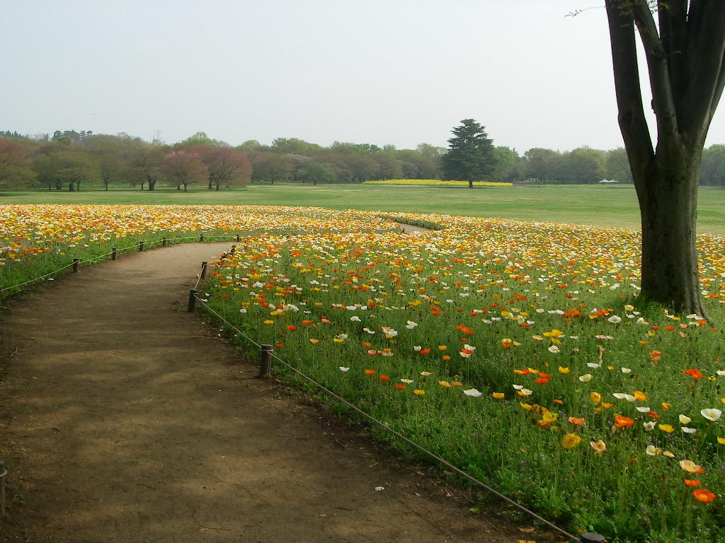 記念公園通信_b0172896_1845516.jpg