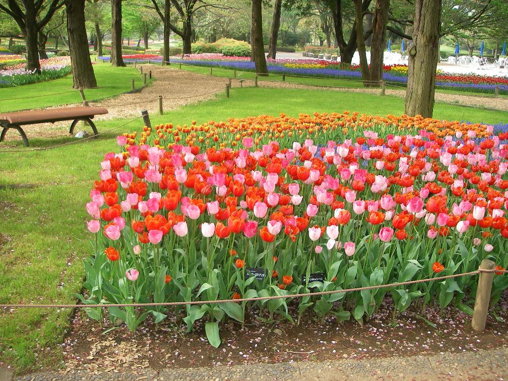 記念公園通信_b0172896_1851836.jpg