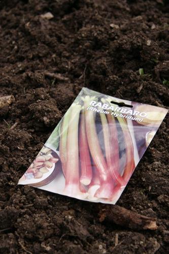 ジャガイモの芽が出ました♪~4月の畑_f0106597_14223.jpg