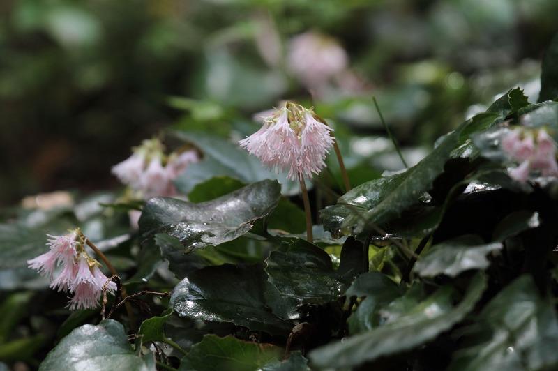 季節の花たち4-4_b0223198_21402281.jpg