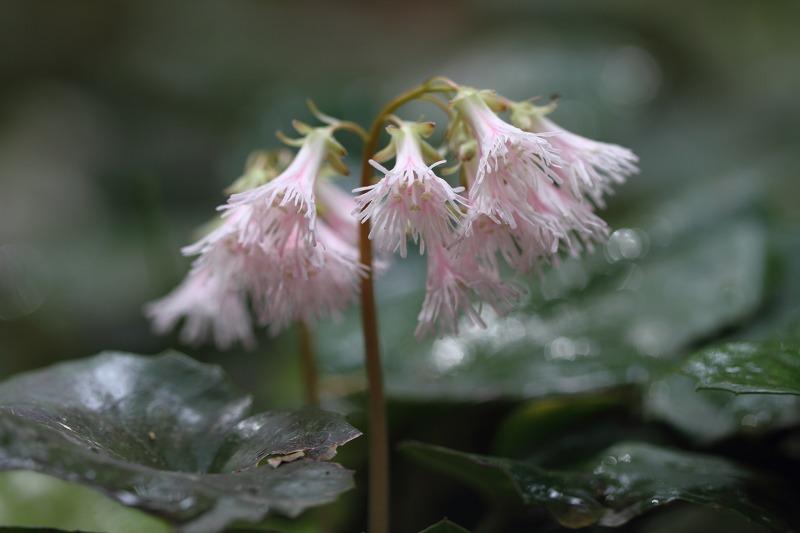 季節の花たち4-4_b0223198_2140675.jpg