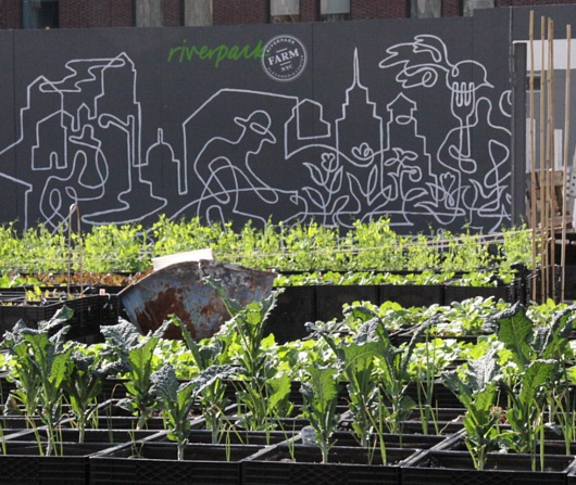 レストランと生命科学研究センターが運営するニューヨークの都市農園、リバーパーク・ファーム_b0007805_2432365.jpg