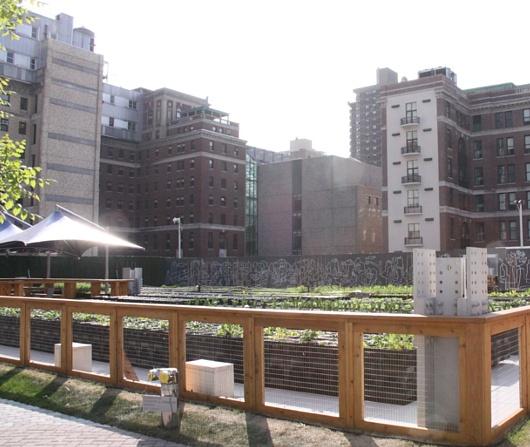 レストランと生命科学研究センターが運営するニューヨークの都市農園、リバーパーク・ファーム_b0007805_2455843.jpg