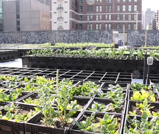 レストランと生命科学研究センターが運営するニューヨークの都市農園、リバーパーク・ファーム_b0007805_2462413.jpg