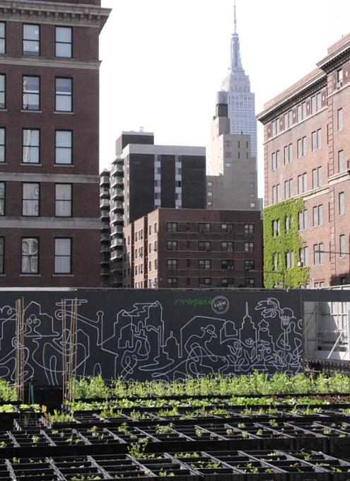 レストランと生命科学研究センターが運営するニューヨークの都市農園、リバーパーク・ファーム_b0007805_2463146.jpg