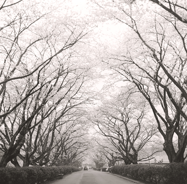 桜の海_d0127209_21444515.jpg