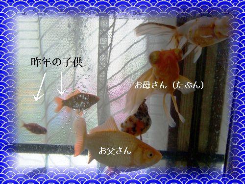 d0048312_1722434.jpg