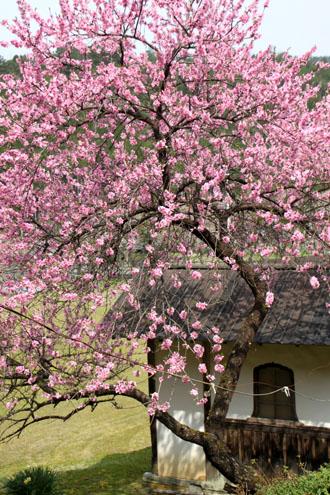 黒田の常燈寺_e0048413_1644865.jpg