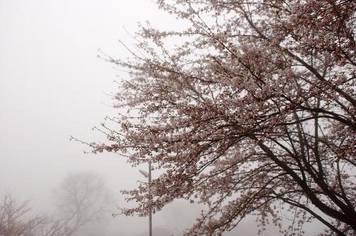 花曇り_e0099713_21123249.jpg