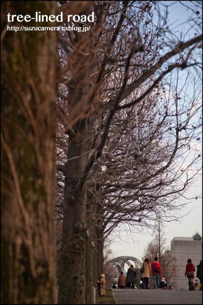 native of Yokohama 「街路樹とともに」_f0100215_23514016.jpg