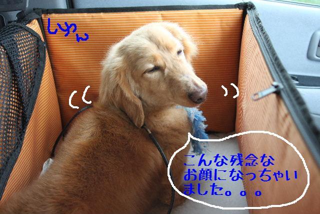 b0130018_10202787.jpg