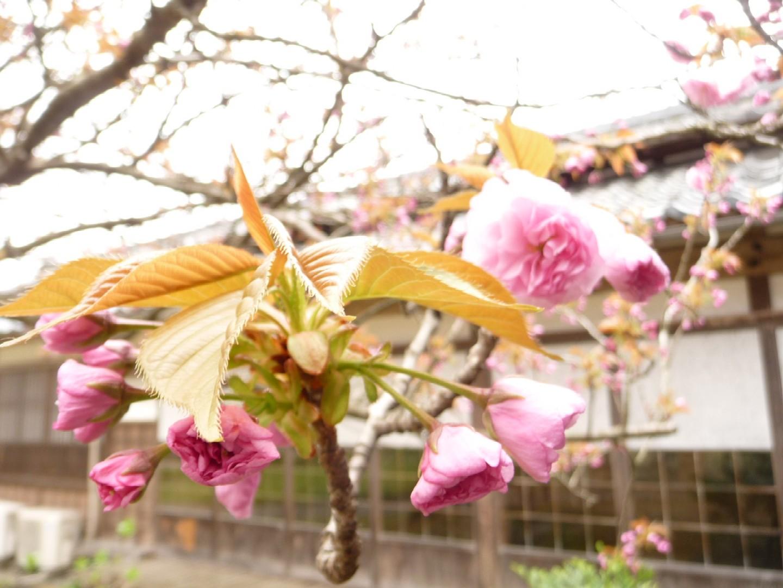 ~ 春ですね! ~_e0135219_1411592.jpg
