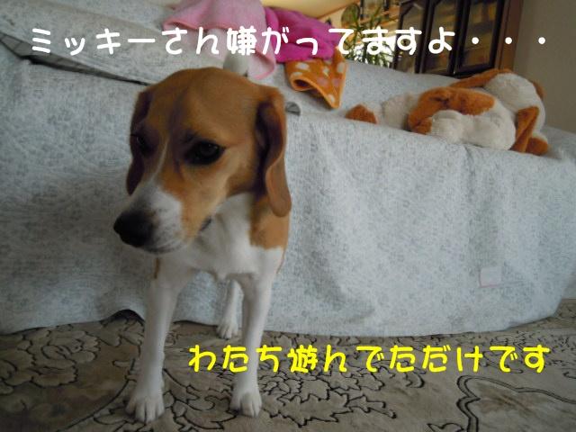 c0166622_20481745.jpg