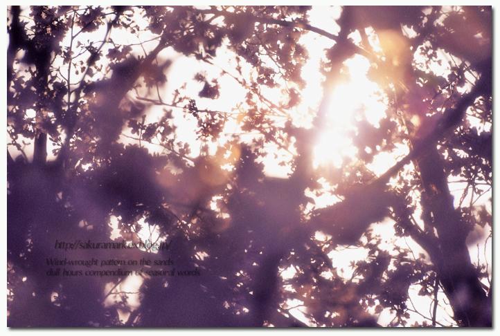SAKURA 2012 ~夕日を浴びて・・・、春の記憶~_f0235723_17224576.jpg
