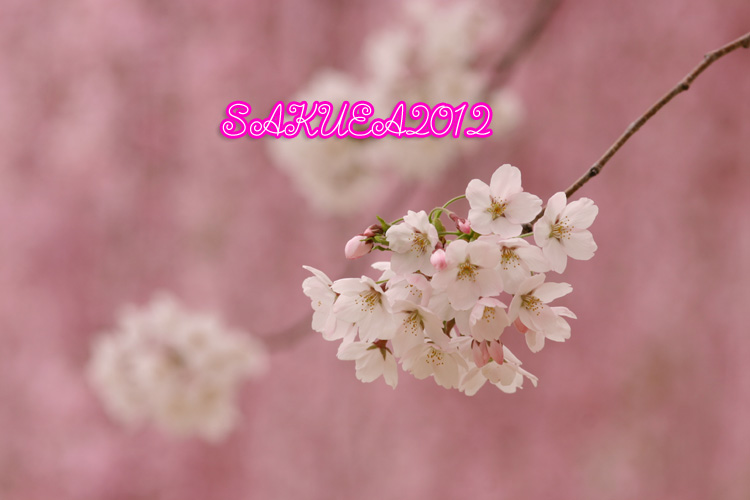 d0015026_911636.jpg