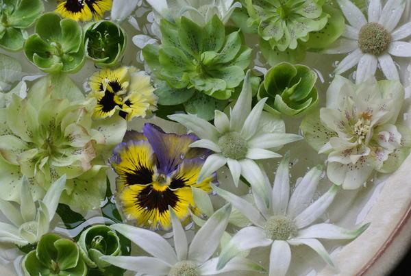 花びらを浮かべる_a0186034_1328774.jpg