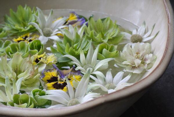 花びらを浮かべる_a0186034_13401813.jpg