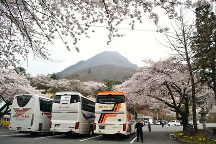 桜満開の水澤観音&BUBUcafe 2012_e0228938_20263020.jpg