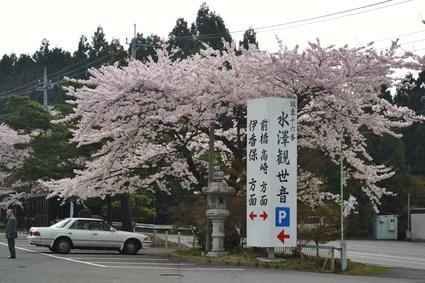 桜満開の水澤観音&BUBUcafe 2012_e0228938_20273059.jpg