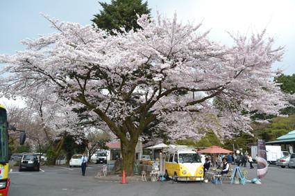 桜満開の水澤観音&BUBUcafe 2012_e0228938_20281468.jpg