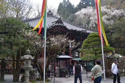 桜満開の水澤観音&BUBUcafe 2012_e0228938_20304797.jpg