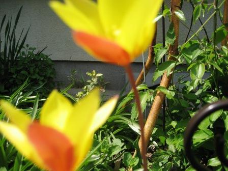 春巻き_c0206545_15273825.jpg