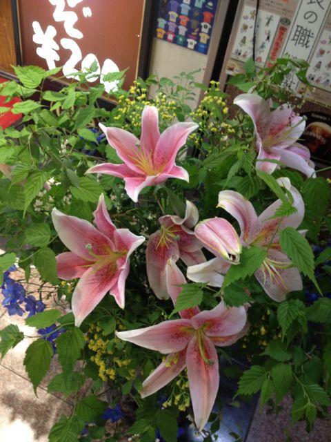 花とベルクのあいだで_c0069047_21235392.jpg