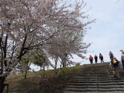 富士見の桜ウォーク_f0019247_0155050.jpg