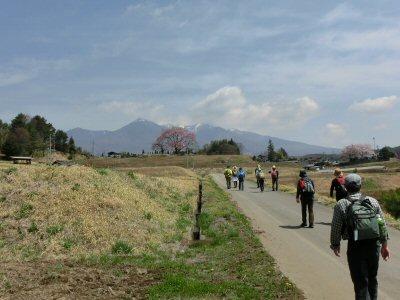 富士見の桜ウォーク_f0019247_033133.jpg
