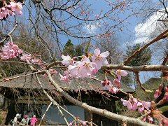 富士見の桜ウォーク_f0019247_075953.jpg