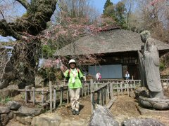 富士見の桜ウォーク_f0019247_083075.jpg