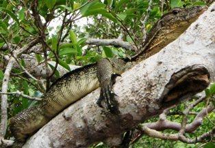 ガラマ川のリバークルーズに出会える動物_a0132757_10105193.jpg
