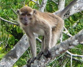 ガラマ川のリバークルーズに出会える動物_a0132757_1034197.jpg