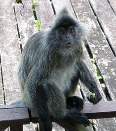 ガラマ川のリバークルーズに出会える動物_a0132757_1041247.jpg