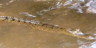 ガラマ川のリバークルーズに出会える動物_a0132757_1043934.jpg