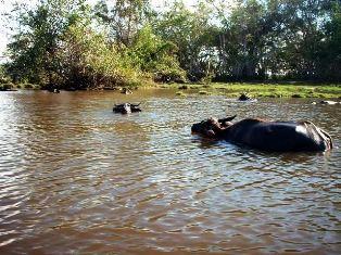ガラマ川のリバークルーズに出会える動物_a0132757_106246.jpg