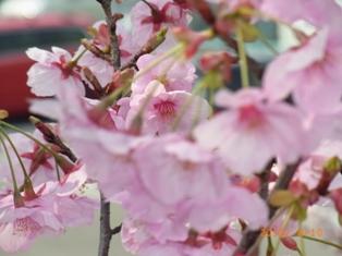 京都~お寺巡りととうふカフェ_e0195766_4485912.jpg