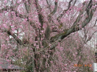 京都~お寺巡りととうふカフェ_e0195766_4493354.jpg