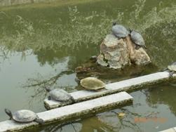 京都~お寺巡りととうふカフェ_e0195766_4505592.jpg