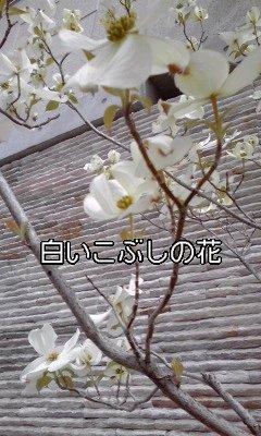 f0200871_025656.jpg