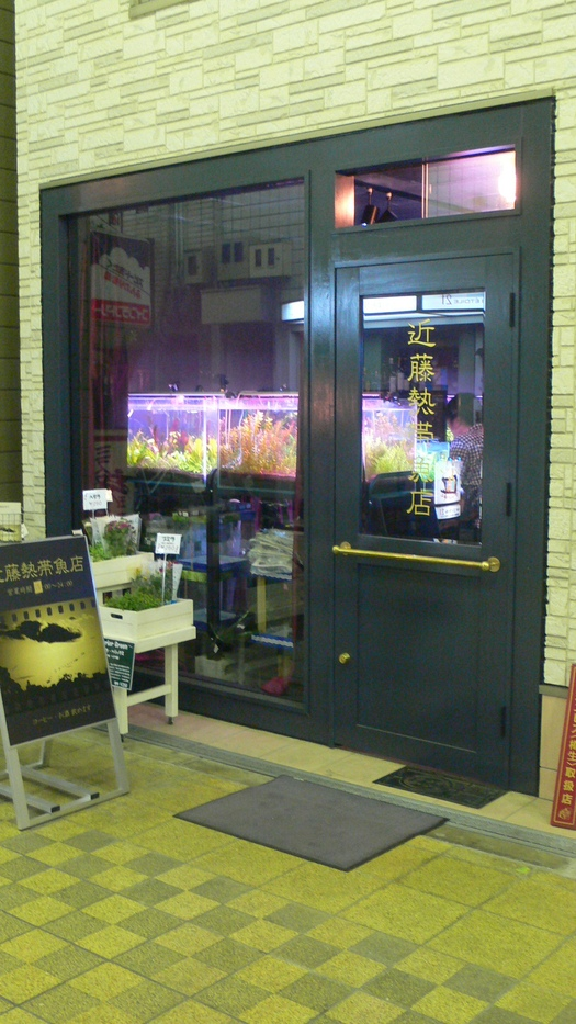 「近藤熱帯魚店」でハイボール_c0061686_8141246.jpg
